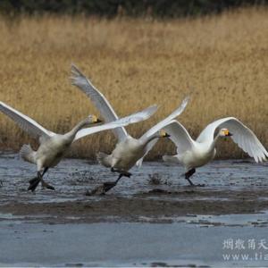 中国野生动物保护